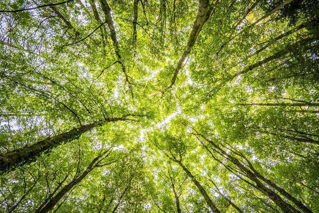 forest-trees-perspective-bright-957024.jpeg